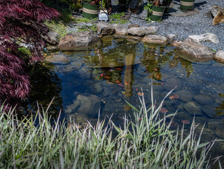 Pond & Pool